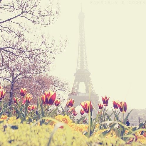 Eiffel Tower Flowers Paris Photography Spring Favim 61961
